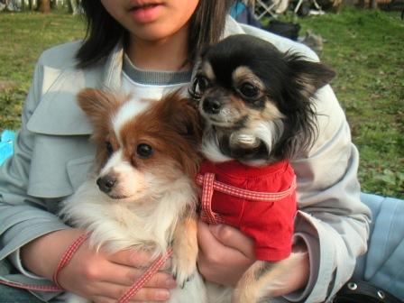 080329_dogs.JPG