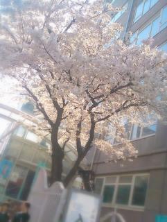 20110406_nyugaku.JPG