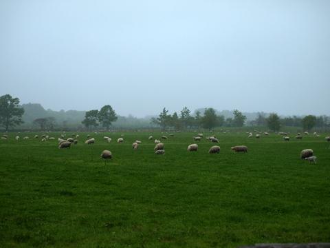 9_farm.JPG
